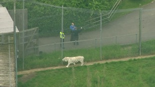 Zoo keeper killed by tiger at Hamerton Zoo