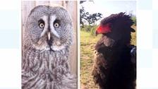 Rare birds of prey worth £8000 stolen from show