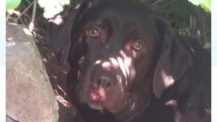 Dog rescued and returned to family uninjured after falling down cliff