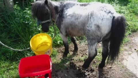 HORSE_FOR_WEB