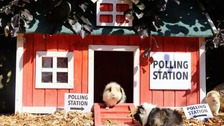 Polls were open early for these furry voters.