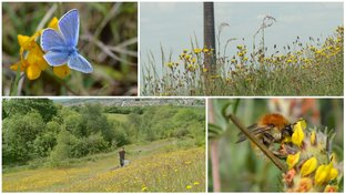 How old colliery sites can be a haven for rare and diverse wildlife