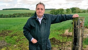 Alex Salmond feeling 'naughty in fields of wheat' on campaign trail