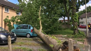 Teenager has lucky escape after tree falls on car