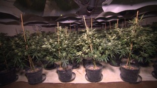 Three men admit converting nuclear bunker into huge cannabis factory