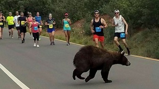 That's no normal runner: Bear crashes US race