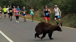 What's your best time? The bear joins the race in Colorado.