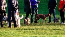Dog walkers.