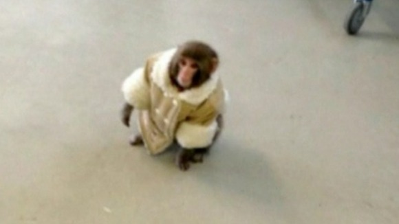 Pictures of the day Ikea Monkey