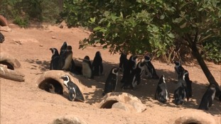 penguins in the shade