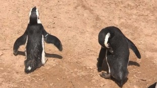 West Country Zoo animals enjoy rising temperatures