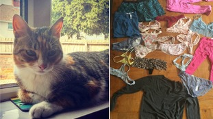 This real life cat burglar keeps stealing clothes from neighbours