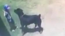 Video: Dog prepares to jump on child in garden