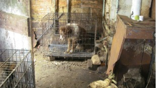 Lifetime ban for woman who kept dogs in 'prison cells'