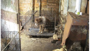 Dogs lived in 'own little prison cells' in horrific conditions