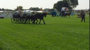Horses already in action