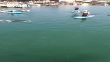 Dolphin frolics in sea with schoolchildren