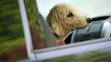 Pets can overheat in cars in warm weather