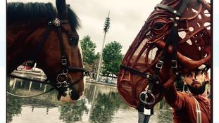 Horseplay in Bradford