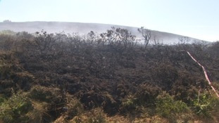gorse fire damage