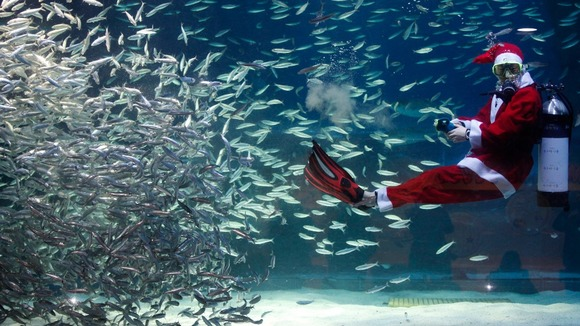 Day in pictures Santa diver Sardines