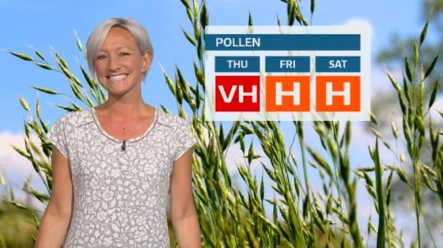 pollen22