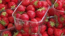 Fruit industry struggles to get seasonal workers from EU
