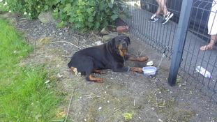 Rottweiler found left tied to playing field railings in Leeds