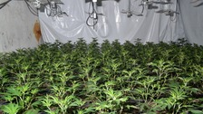 A massive cannabis farm has been discovered.