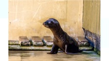 First sea lion pup in 12 years