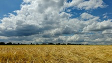 Sunny spells over fields of gold