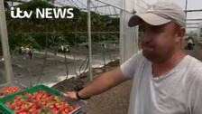 Labour crisis affects South East fruit farms
