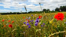 Wild flowers near St Albans in Hertfordshire.