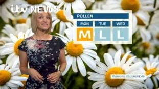 Sunday's Pollen for the Border region