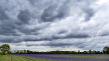 Cloudy skies over a field of crops