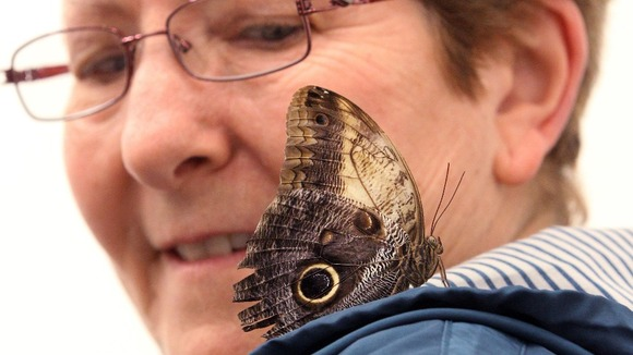A woman looks at a butterfly in a display room entitled 'In and Out of Love (White Paintings and Live Butterflies)'.