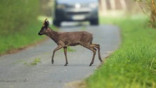 Cumbria Police conducted vehicle spot checks as part of their crackdown on deer poachers