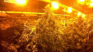 Cannabis worth £1 million has been seized in West Cumbria
