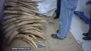 How criminal gangs in one Chinese town are dominating the illegal ivory trade