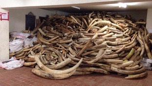 A huge haul of ivory.