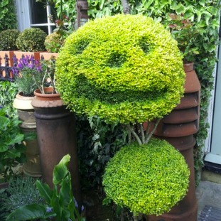 Topiary Face