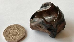 Rhino Tooth