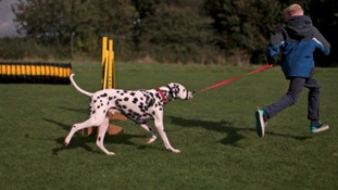 A dog exercising at Dogs Trust