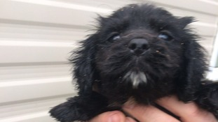 Man banned after selling puppies infested with fleas
