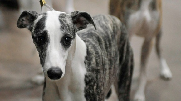 Top Reasons Dogs Are Rehomed Uk
