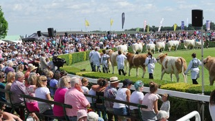 Great Yorkshire Show: Our guide for visitors