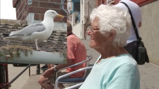 84-year-old woman 'nearly blinded' in seagull attack