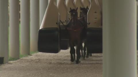 JOCKEYLESS_HORSES.transfer