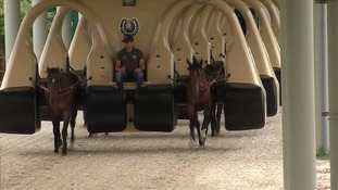 The future of racing? New £20m machine puts horses through their paces