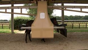 Horses use the machine.